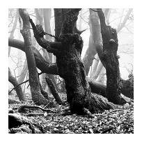 Krkonošský prales